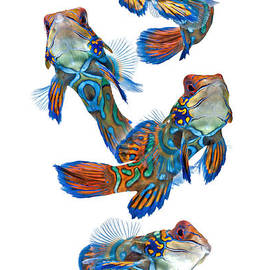 Dance Of Mandarin Fish by Visarute Angkatavanich