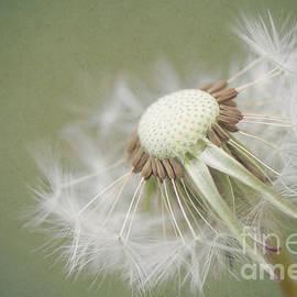 LHJB Photography - Dandelion