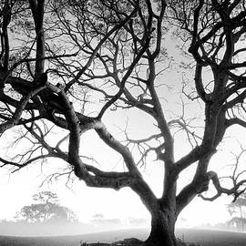 John Rush - Dead Oak Fog