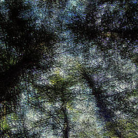 Peri Craig - Deep Wood
