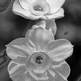 Annda Bell - Digital Flowers