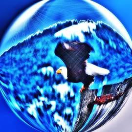 Don Mann - Eagle in Blue
