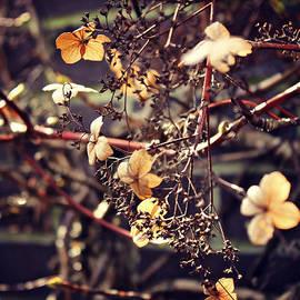 Alanna DPhoto - Rustic Floral Vines