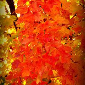 Susanne Van Hulst - Fall Foliage