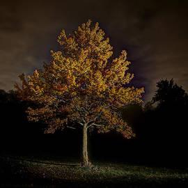 Nicholas  Grunas - Fall Tree
