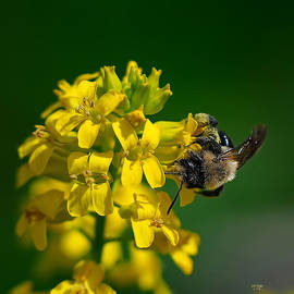Lois Bryan - Fanfare For The Common BumbleBee