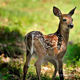 Fawn Toddler by Nava Thompson