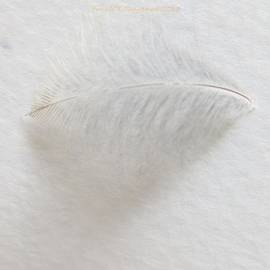 Sonali Gangane - Feather touch
