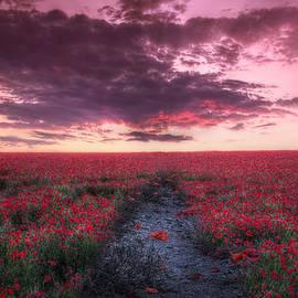 Lee-Anne Rafferty-Evans - Field of Poppies