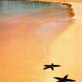Fiji Beach with Starfish by Jerome Stumphauzer