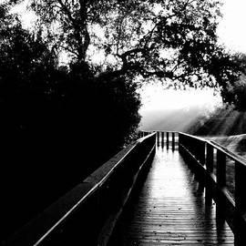 John Rush - Foggy Trail
