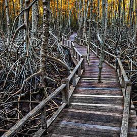 Footpath Mangrove Forest Thailand by Adrian Evans