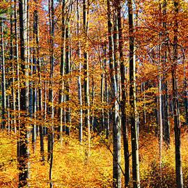 Mariola Bitner - Forest of Gold
