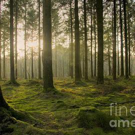 Sophie De Roumanie - Forest Peace