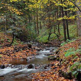 Stephen  Vecchiotti - Forest Stream In Autumn