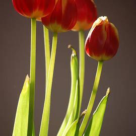 Dickon Thompson - Four Tulips