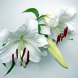 Fresh Lilies by Nick Kloepping