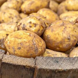 Tom Gowanlock - Freshly harvested potatoes in a wooden bucket
