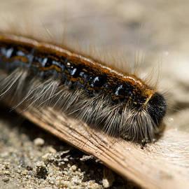 Fuzzy Crawler by Michael Wilcox