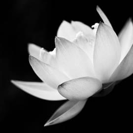 Priya Ghose - Ghost Lotus II
