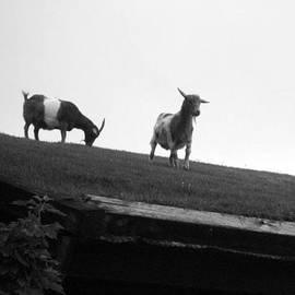 Dyana Rzentkowski - Goats On Roof