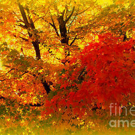 Susanne Van Hulst - Golden Colors of Fall