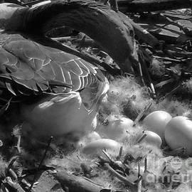 Val Arie - Eggs - Goose