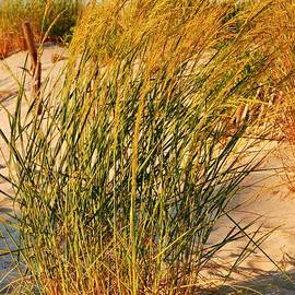Grass Dune I - Jersey Shore by Angie Tirado