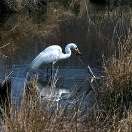 Great Egret With Fish Dmsb0034 by Gerry Gantt