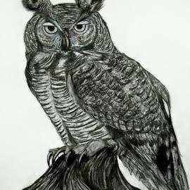 Elizabeth Guilkey - Great Horned Owl