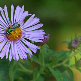 Doris Potter - Green and Purple