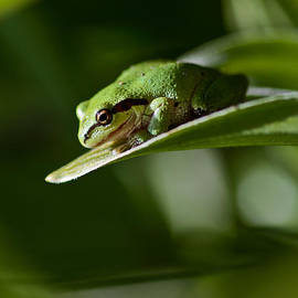 Green by Mitch Shindelbower