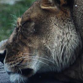 Grumpy Kitty by Scott Hovind