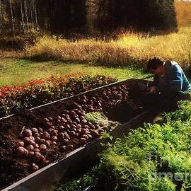 Harvesting the Crop by RC DeWinter