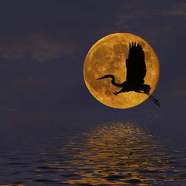 Amy Jackson - Heron and the Harvest Moon