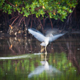 Heron Takes Flight by Jim DeLillo
