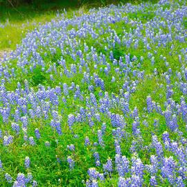 Michael Flood - Hill Country Blue Bonnets