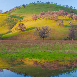 Hill Reflection In Pond by Marc Crumpler