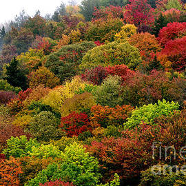 Thomas R Fletcher - Hillside Canvas Fall Color