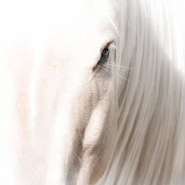 Toni Thomas - Horse Glow