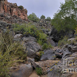 In The Arroyo   by Ron Cline