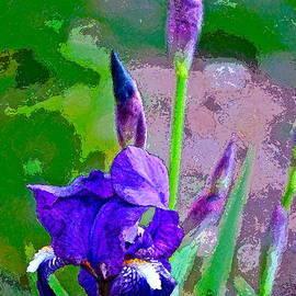 Iris 26 by Pamela Cooper