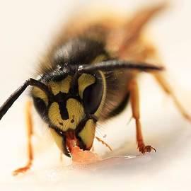 AMY Whimsicalworks - Jammy Wasp