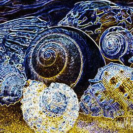 Carol F Austin - Abstract Seashell Art