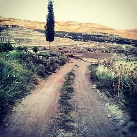 #jo #jordan #amman #nature #green #road