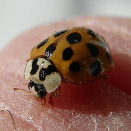 Chad and Stacey Hall - Ladybug On Finger