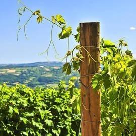 Landscape with vineyard by Elena Elisseeva