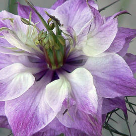Pamela Patch - Lavender Love