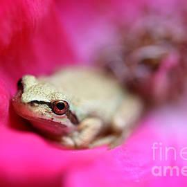Jennie Marie Schell - Little Frog in Red Rose Flower II