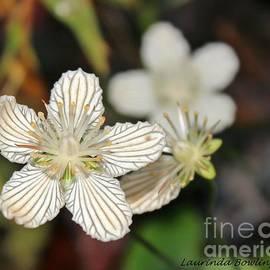 Laurinda Bowling - Little Wildflower